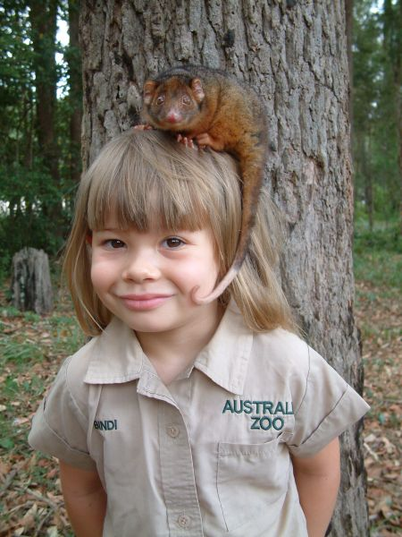 Image result for young bindi irwin
